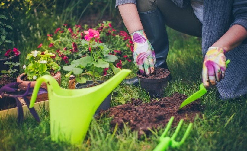 Gardening column: three ways to fill out homegrown ... on Gardening  id=92348